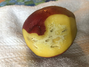 White, hole-y stuff in your mango?