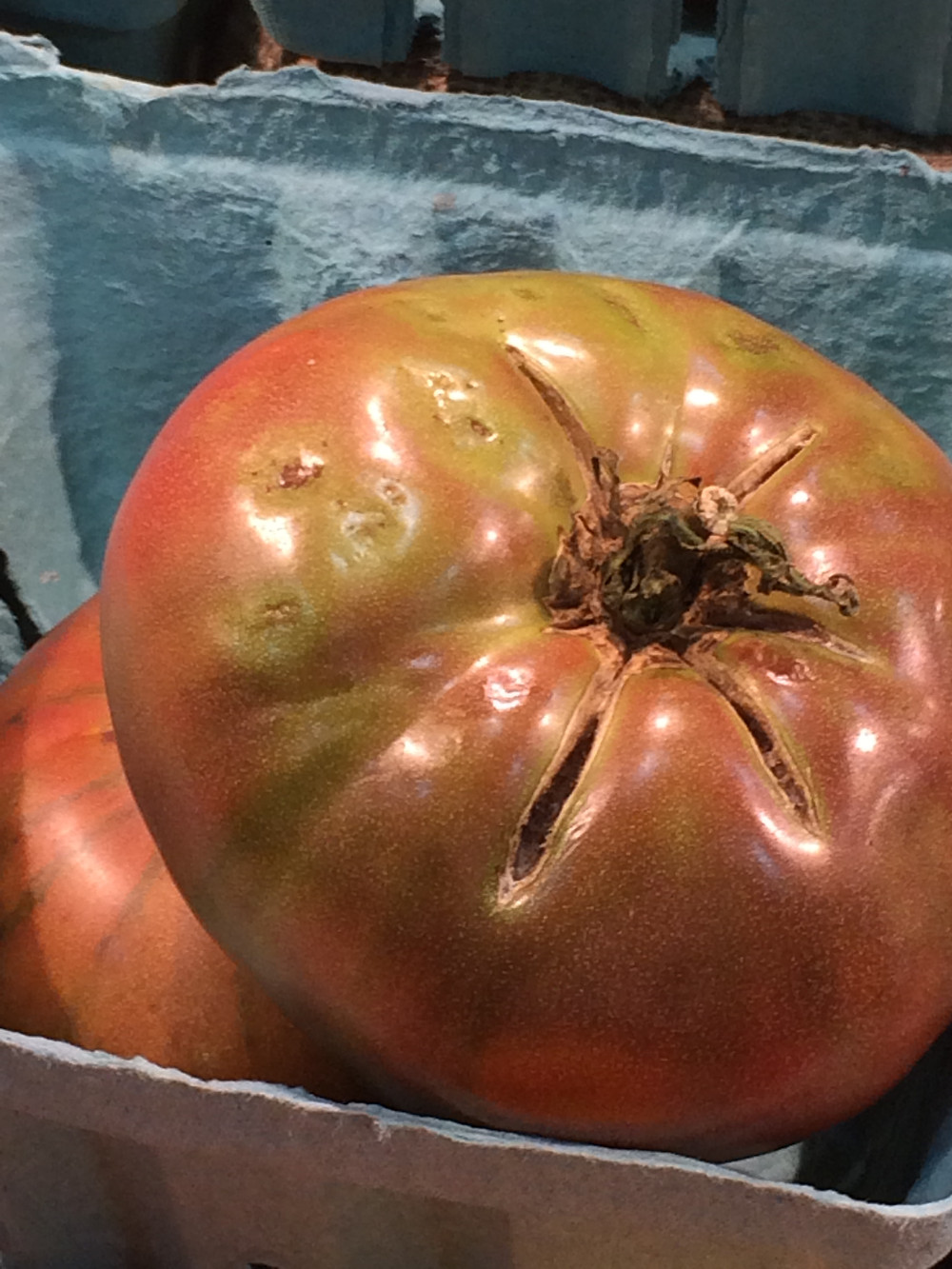 This tomato's skin cracked after its inside grew faster than its outside could keep up with.