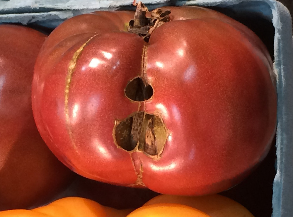 The holes in this tomato look alarming, but they're nothing to worry about.