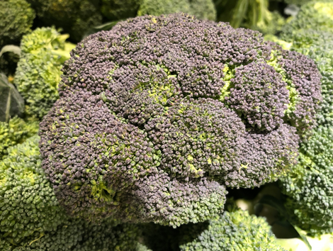 Why does some broccoli look blue?