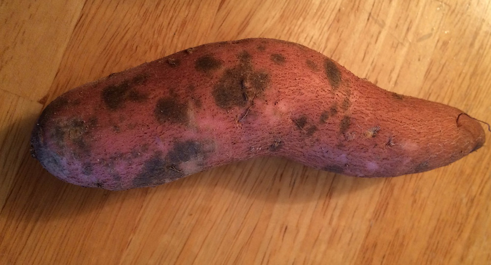 This sweet potato has scurf, a fungus that can be peeled off because it only affects the skin.