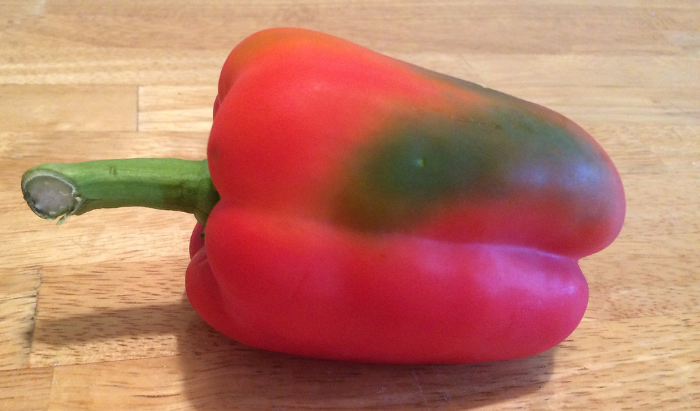 This red pepper still has a green patch, but it will still taste great!