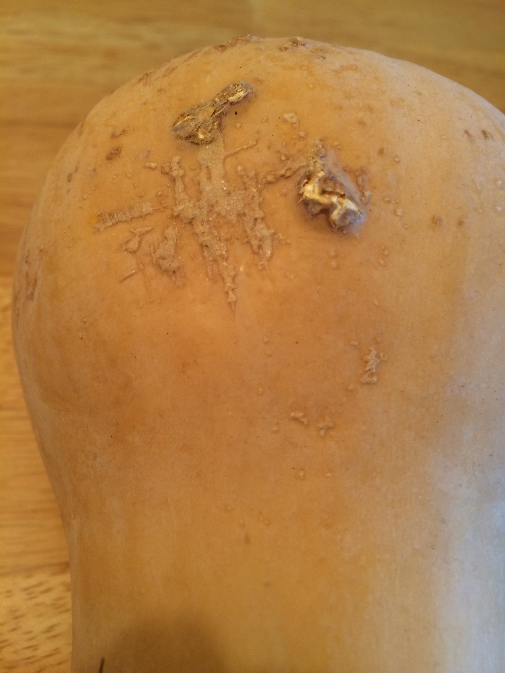 Squash with scars that resemble dirt