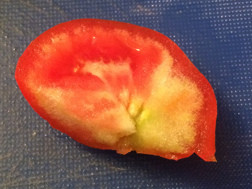 White hard areas inside a tomato indicate that it didn't develop proper flavor, color or texture