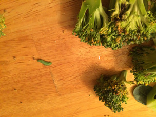 Green caterpillars hanging in the broccoli jungle