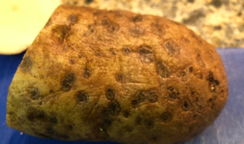 Sunken spots with dots in the middle signal a lenticel infection in this potato.