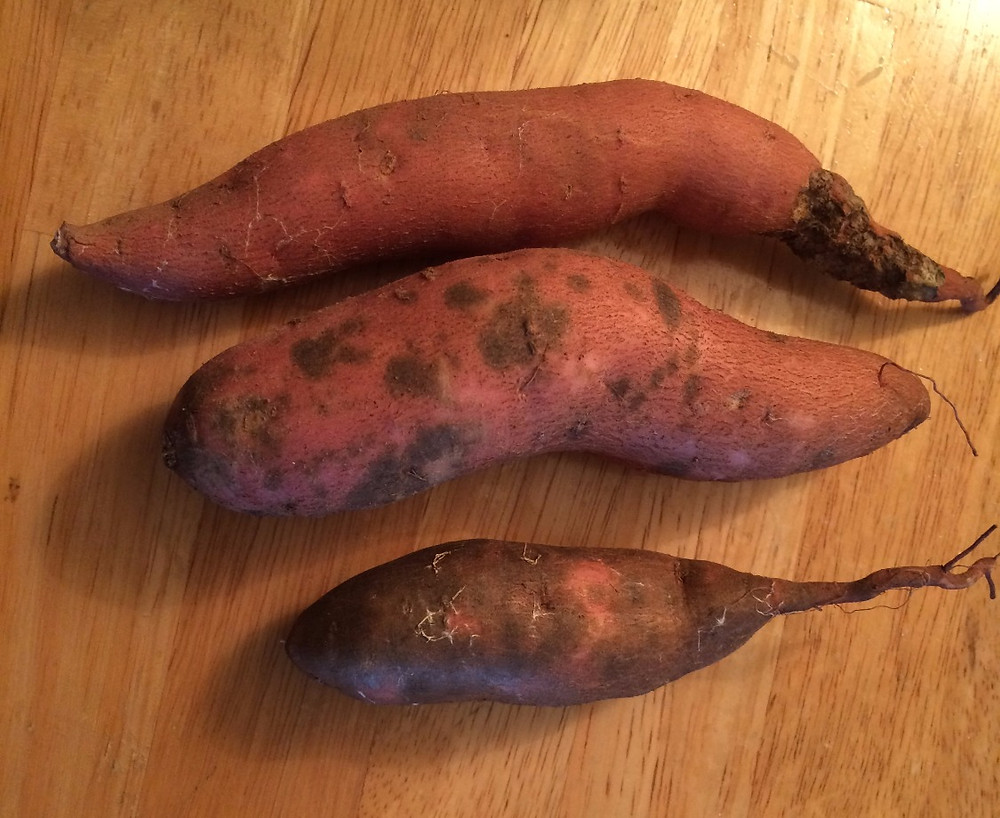 Some sweet potatoes showing off their scurf