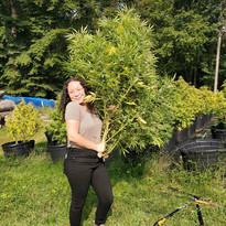 Amanda helping with Harvest