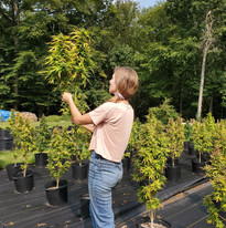Sara Harvesting some Sour Space Candy