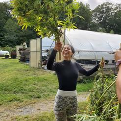 Nina Harvesting!