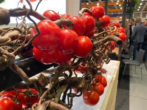 NEWS: Fruitlogistica Berlin 2020: Punzi anwesend.