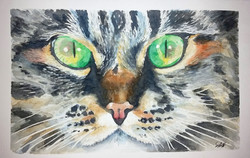 green eyes cat