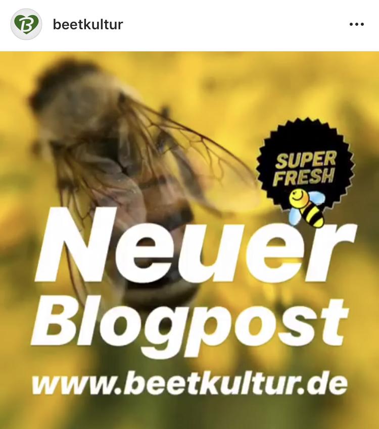 Juni 18 Ich darf in einen Bienenstock eintauchen