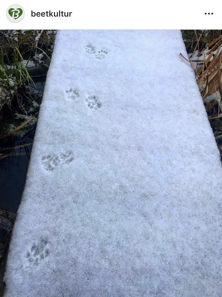 Januar 18 Katzenpfotenspuren führen an die schönsten Plätze