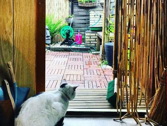 Das neue Jahr beginnt mit Gartensehnsucht & einem tollen Gartenbuch
