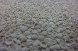 Exposed Aggregate Series