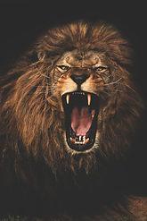 WZ ROARING LION.jpg