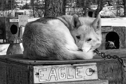 Eagle - relaxed