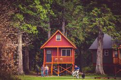 The Red Cedar