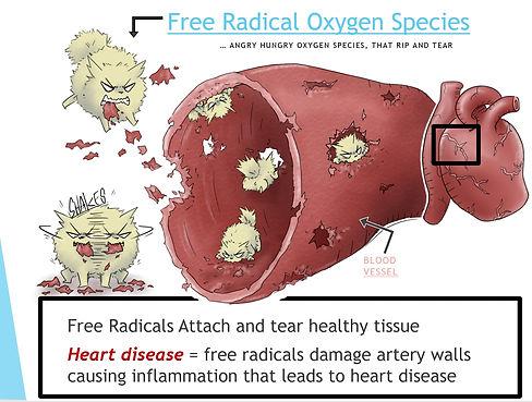 free radicalss.jpg