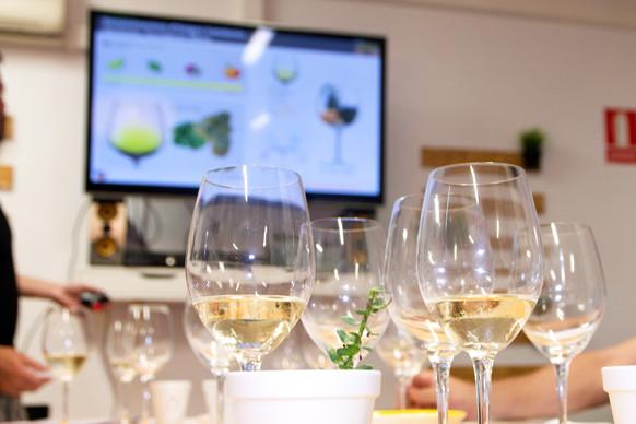 curs tast de vins