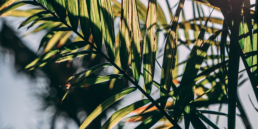 Palm Sunday - In Person Outdoor & Live Stream