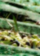 Olive telo.jpg