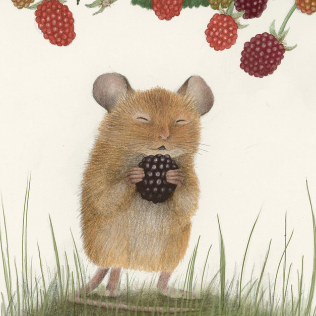 Berry Mouse