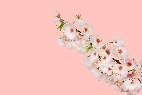 Flowers on Pink_.jpg