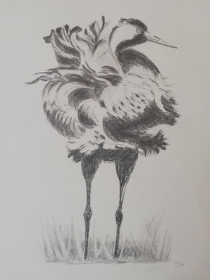 Dany Gérard - oiseau