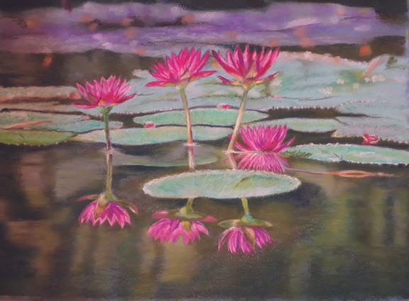 Les lotus-Gilles Cosson