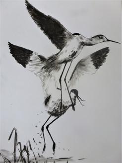 Anita Loiseleur-les oiseaux_encre de chine