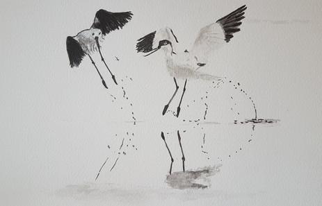Catherine Noguès-oiseaux encre de chine