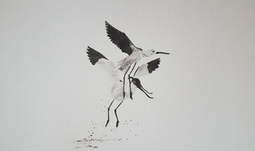 Catherine Noguès-oiseaux envol