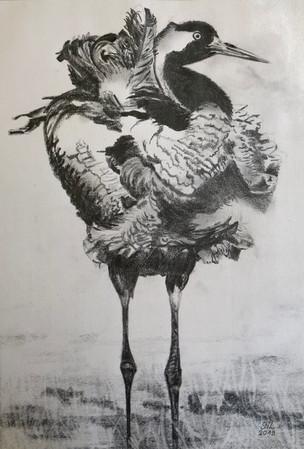 Severine Lautraite_Oiseau