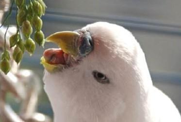 Haben Vögel einen Bauchnabel?
