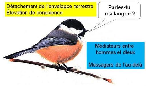 carte tarot etoile oiseau symbolique  1 vincent beckers
