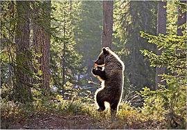 vincent beckers ours du tarot