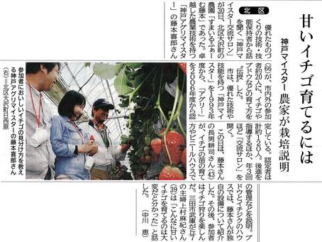 甘いいちご育てるには 神戸新聞に掲載