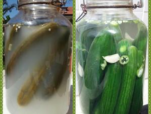 ירקות כבושים ופרוביוטיקה