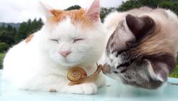 cat snail zen