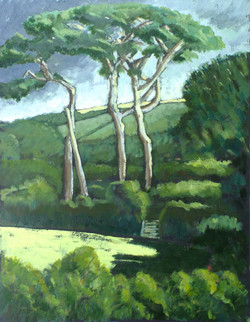 Pine Trees, River Helford