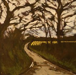 Daffodil Fields at St Michael Penkevil
