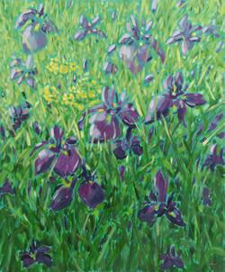 Irises and Primula at Glendurgan