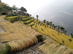 LANDSCAPE - Nepal.jpg