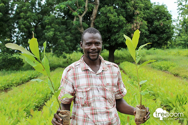 Ghana - a farmer with two new saplings f