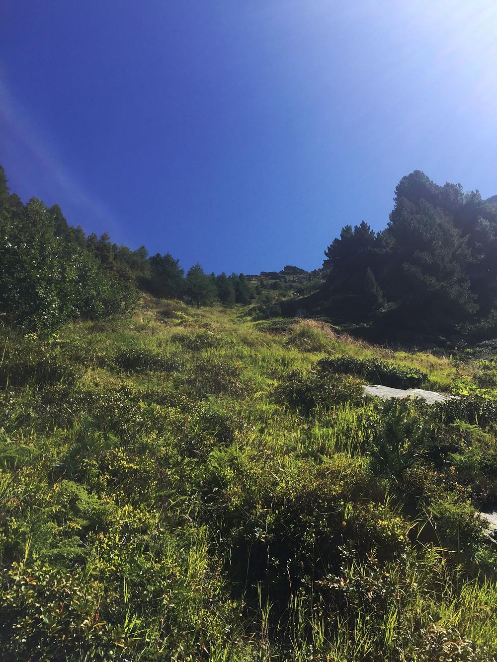 Steep, lush green hiking trail in Chamonix France