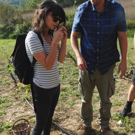 Truffles in Provence: Harvest (Part 1)
