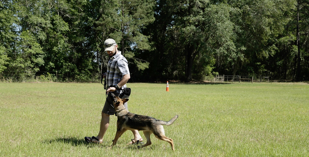 Although some commands may be really simple, they help give structure and understanding to the communication between humans and their dogs.