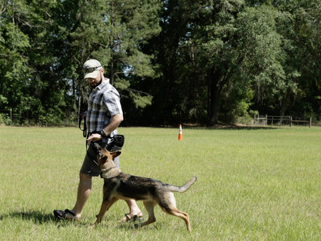 What is a dog pack structure and what does it mean?
